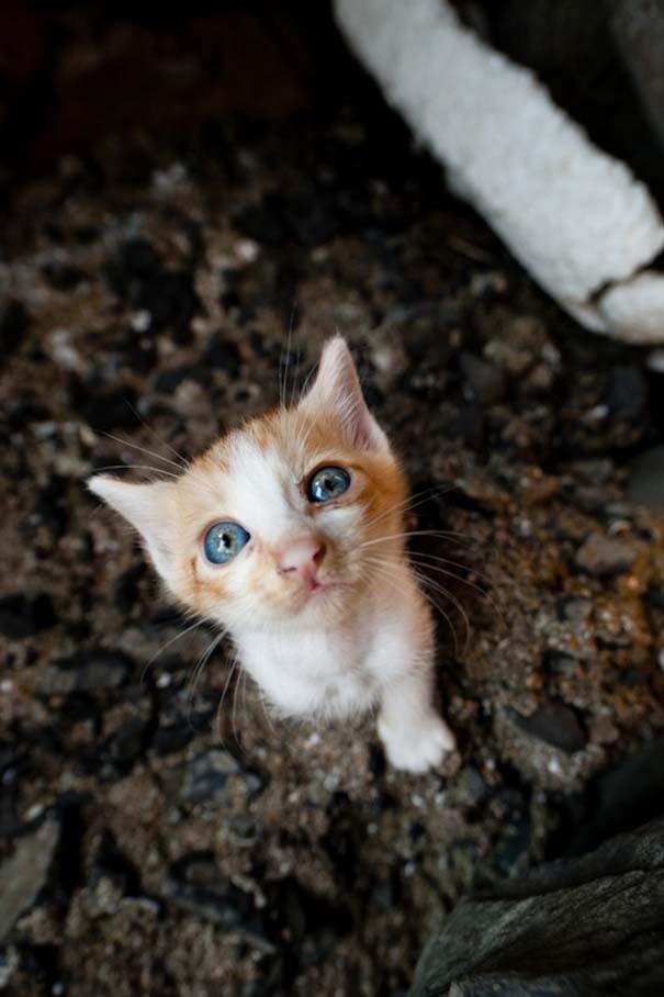 Το νησί παράδεισος για γάτες στην Ιαπωνία (36)