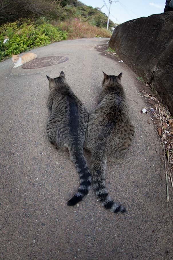 Το νησί παράδεισος για γάτες στην Ιαπωνία (37)