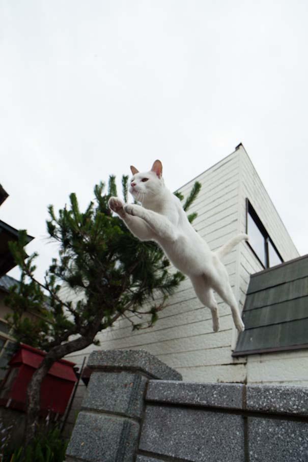 Το νησί παράδεισος για γάτες στην Ιαπωνία (39)