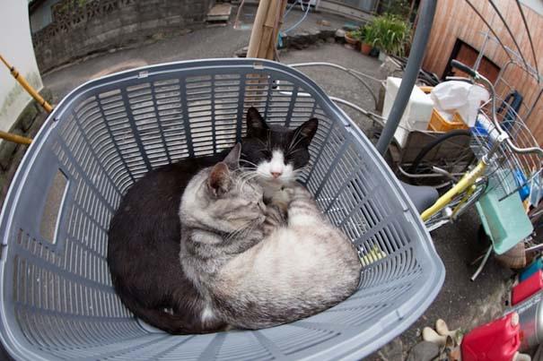 Το νησί παράδεισος για γάτες στην Ιαπωνία (40)