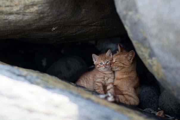 Το νησί παράδεισος για γάτες στην Ιαπωνία (41)