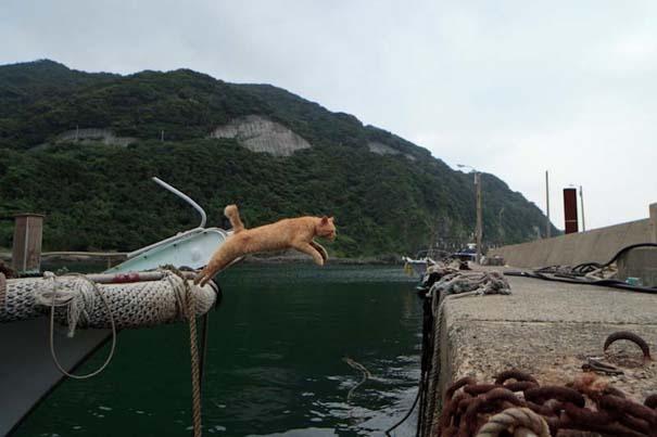 Το νησί παράδεισος για γάτες στην Ιαπωνία (44)