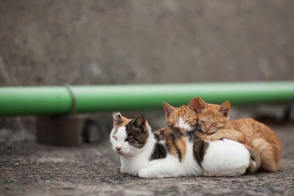 Το νησί παράδεισος για γάτες στην Ιαπωνία (45)