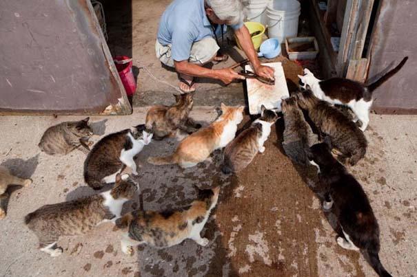 Το νησί παράδεισος για γάτες στην Ιαπωνία (46)
