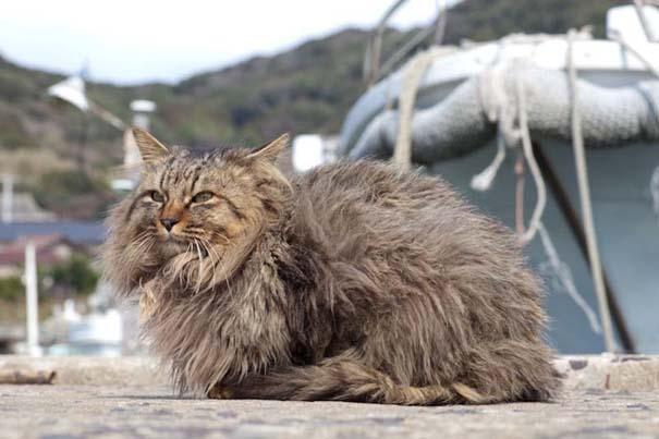 Το νησί παράδεισος για γάτες στην Ιαπωνία (47)