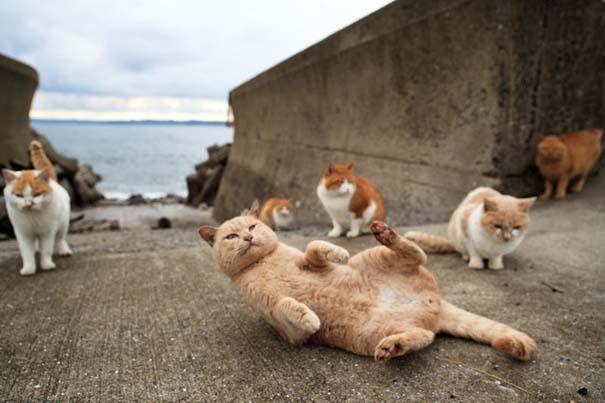 Το νησί παράδεισος για γάτες στην Ιαπωνία (48)