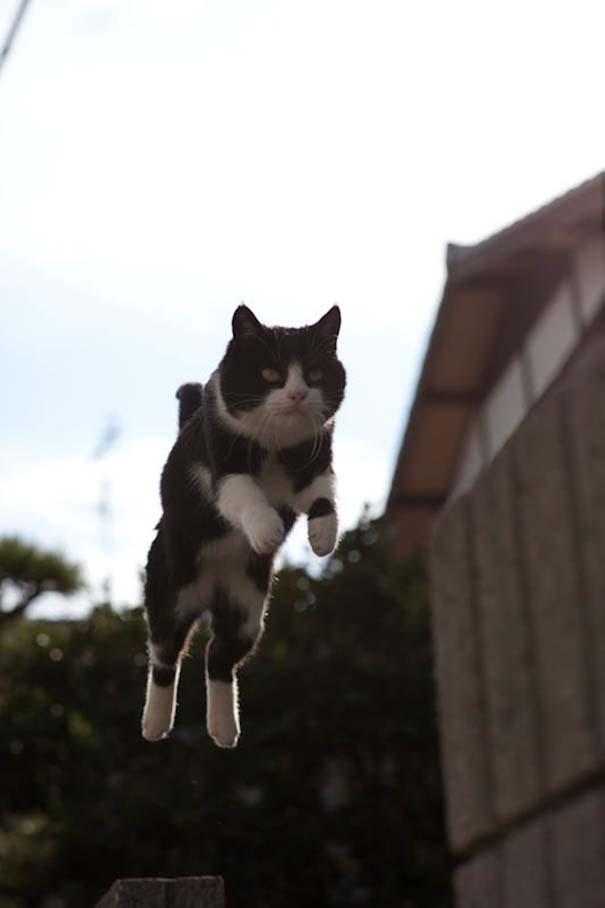 Το νησί παράδεισος για γάτες στην Ιαπωνία (49)