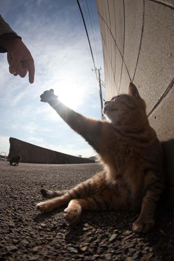 Το νησί παράδεισος για γάτες στην Ιαπωνία (50)