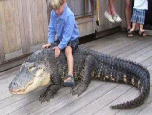 Παιδιά και άγρια ζώα (9)