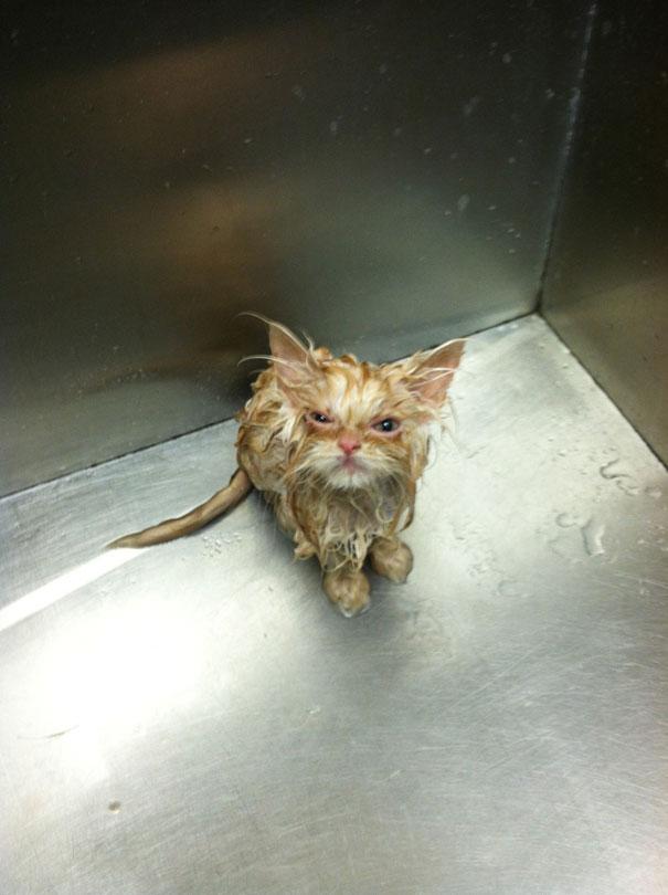Η πιο τσαντισμένη γάτα στον κόσμο | Φωτογραφία της ημέρας