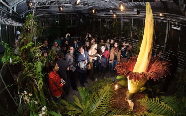Το μεγαλύτερο λουλούδι στον κόσμο | Φωτογραφία της ημέρας