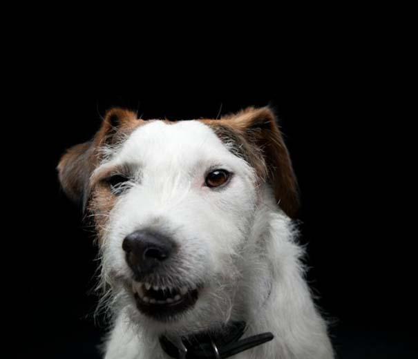 Πορτραίτα σκύλων με προσωπικότητα (1)