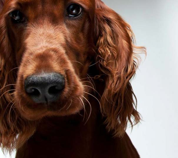 Πορτραίτα σκύλων με προσωπικότητα (2)