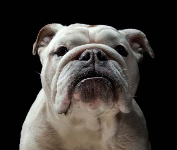 Πορτραίτα σκύλων με προσωπικότητα (3)