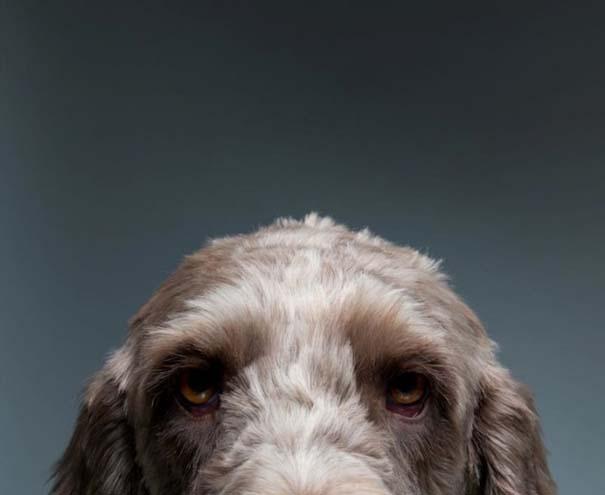 Πορτραίτα σκύλων με προσωπικότητα (5)