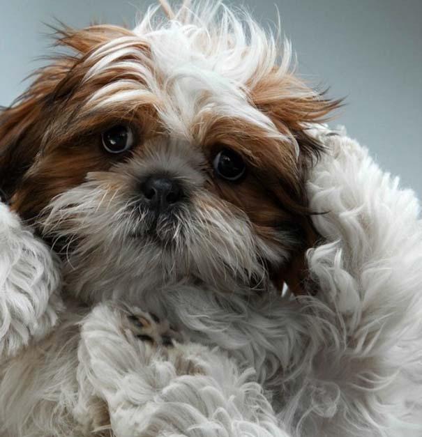 Πορτραίτα σκύλων με προσωπικότητα (7)