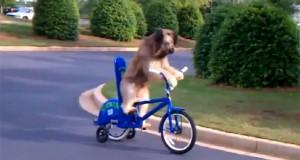 4 σκύλοι με απίστευτες ανθρώπινες ικανότητες (Video)
