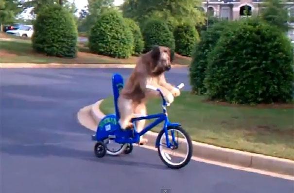 4 σκύλοι με απίστευτες ανθρώπινες ικανότητες