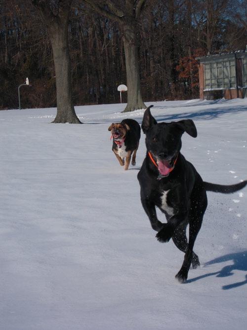 Σκύλοι σε απίθανες στιγμές (18)