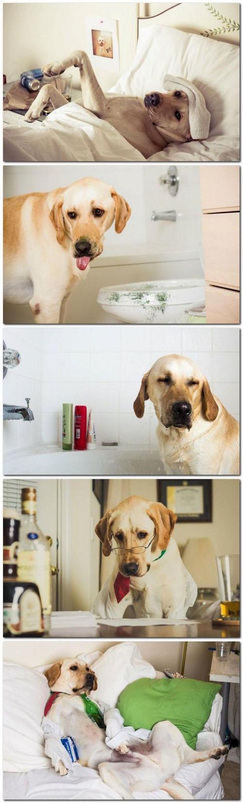 Σκύλοι σε απίθανες στιγμές (26)