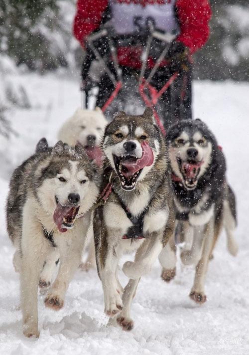 Σκύλοι σε απίθανες στιγμές (42)