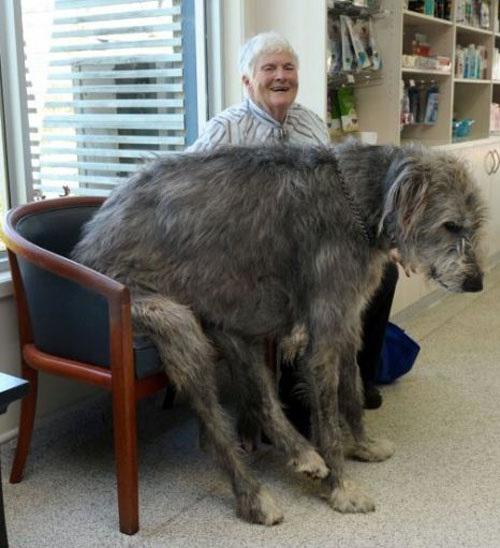Σκύλοι σε απίθανες στιγμές (45)