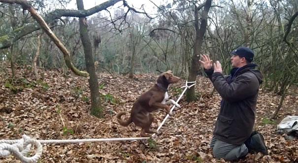 Σκύλος με απίστευτη ικανότητα ισορροπίας