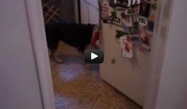 Ο σκύλος που «τρέλανε» τους χρήστες του διαδικτύου
