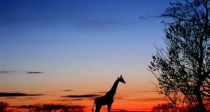 Πως να ταξιδέψετε στην Αφρική με τη βοήθεια του Photoshop
