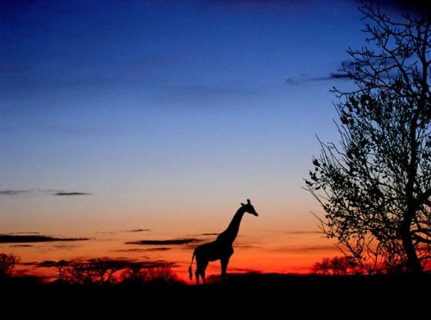 Πως να ταξιδέψετε στην Αφρική με τη βοήθεια του Photoshop (3)