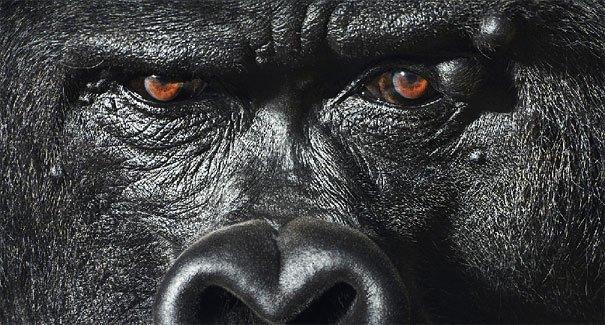 Ζώα φωτογραφίζονται σαν να ήταν άνθρωποι (1)