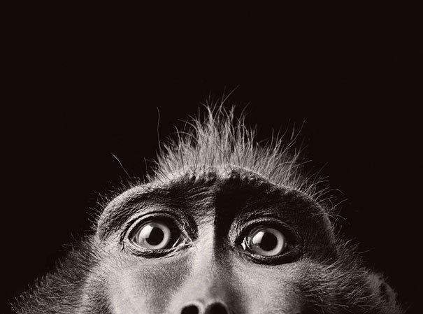 Ζώα φωτογραφίζονται σαν να ήταν άνθρωποι (7)