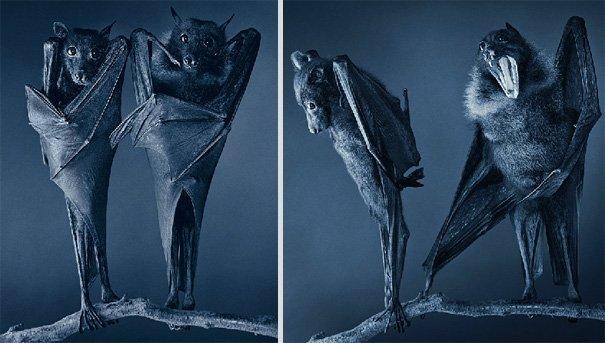Ζώα φωτογραφίζονται σαν να ήταν άνθρωποι (8)