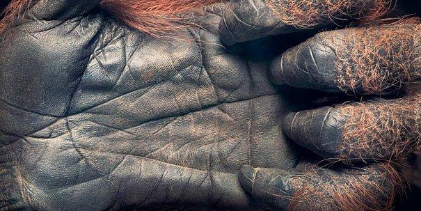 Ζώα φωτογραφίζονται σαν να ήταν άνθρωποι (11)