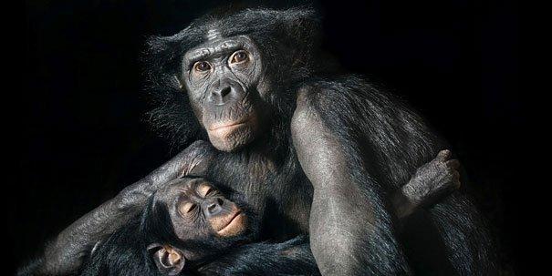 Ζώα φωτογραφίζονται σαν να ήταν άνθρωποι (12)