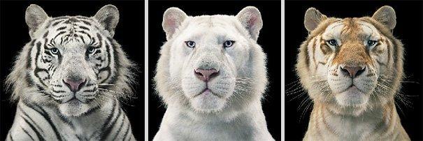 Ζώα φωτογραφίζονται σαν να ήταν άνθρωποι (17)