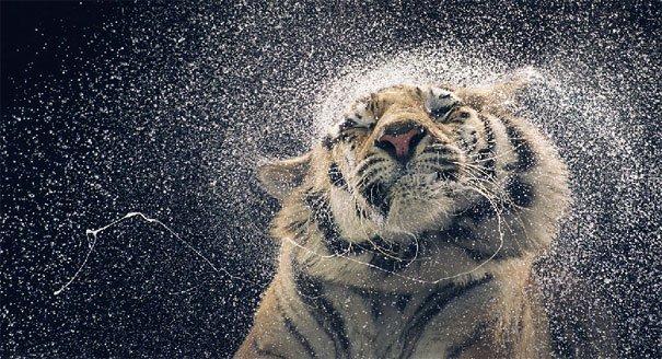 Ζώα φωτογραφίζονται σαν να ήταν άνθρωποι (19)