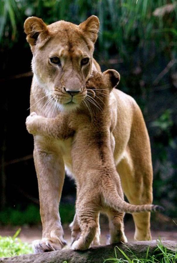 Ζώα με τα μικρά τους (3)