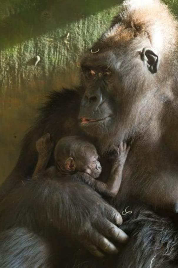 Ζώα με τα μικρά τους (4)