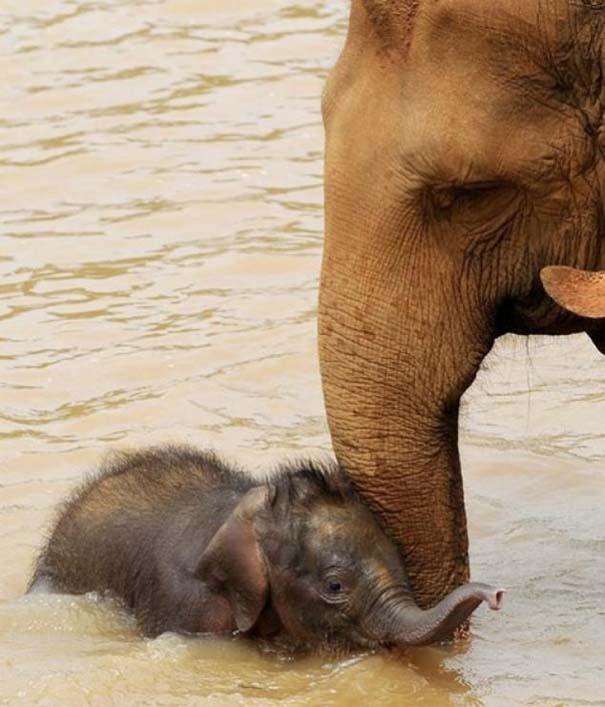 Ζώα με τα μικρά τους (5)