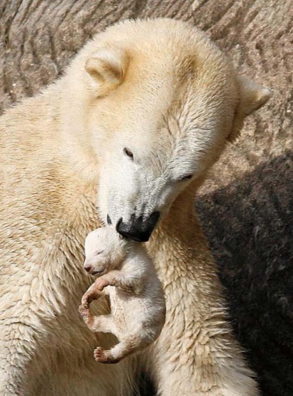Ζώα με τα μικρά τους (6)