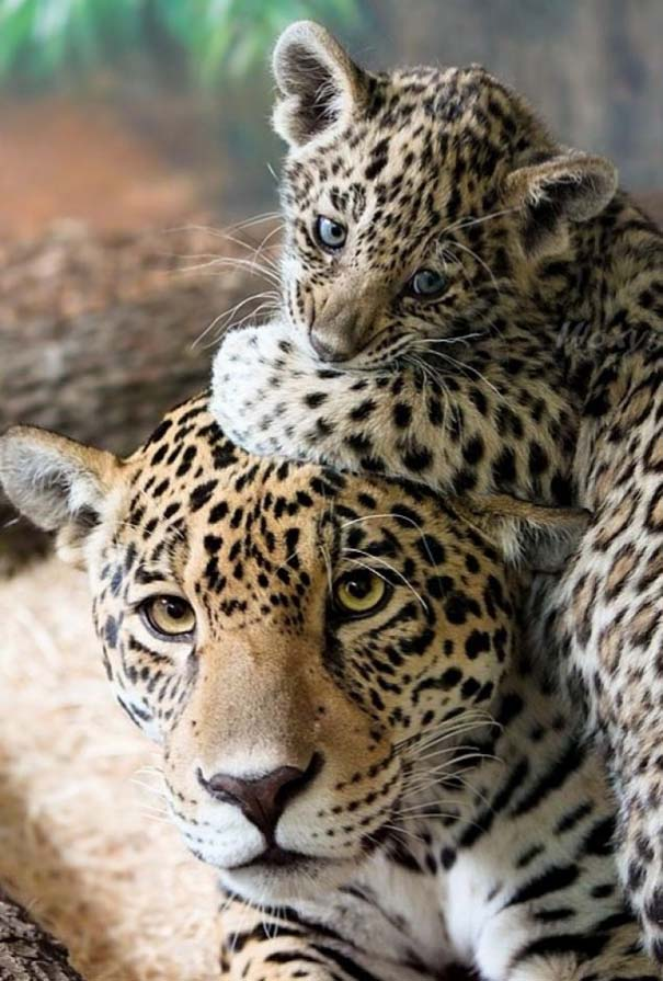 Ζώα με τα μικρά τους (7)