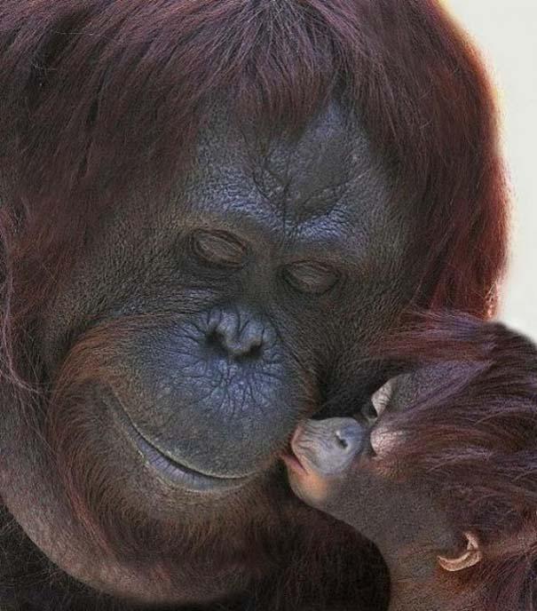 Ζώα με τα μικρά τους (8)