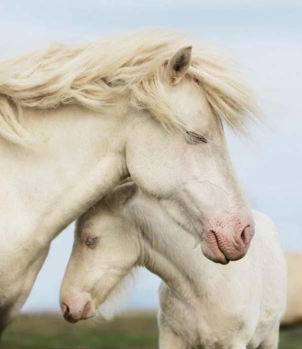 Ζώα με τα μικρά τους (11)