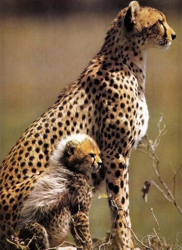 Ζώα με τα μικρά τους (12)