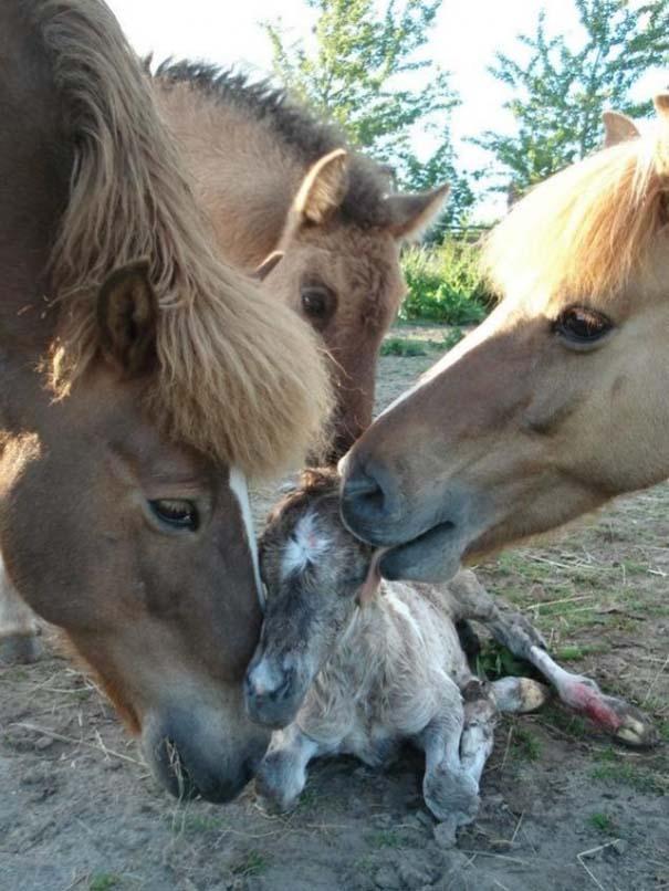 Ζώα με τα μικρά τους (13)