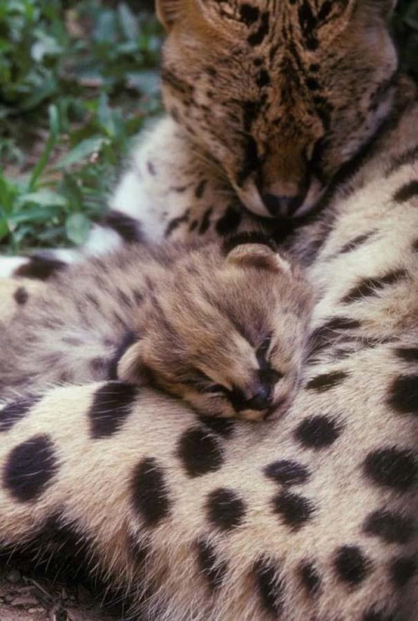 Ζώα με τα μικρά τους (15)