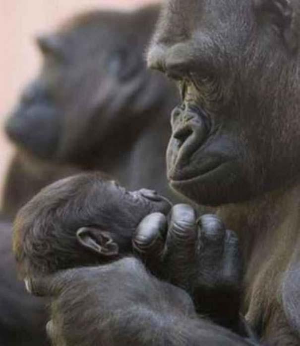 Ζώα με τα μικρά τους (16)
