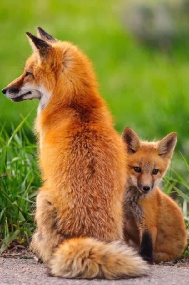 Ζώα με τα μικρά τους (17)
