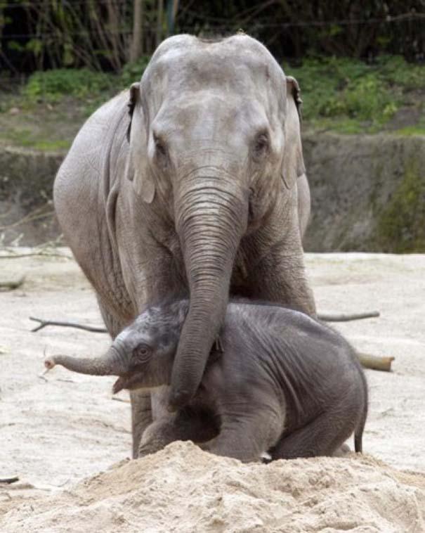 Ζώα με τα μικρά τους (19)